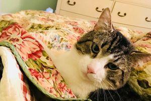 Nữ giáo sư bỏ hơn 300 triệu đồng ghép thận cứu mèo cưng