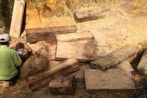 Khởi tố các đối tượng phá rừng ở H.Nam Giang