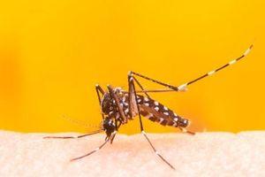 Brazil phát hiện 8 đột biến gene của virus sốt vàng da