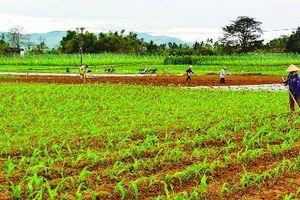 Quảng Nam: Tăng cường công tác quản lý đất đai và xây dựng hệ thống thông tin đất đai
