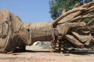 Xác định được nguồn gốc 1 cây cổ thụ 'khủng' trên ô tô chở 3 cậy bị bắt giữ