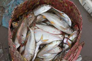 Photo - Làng chài Đằng Châu tất bật mùa cá mòi