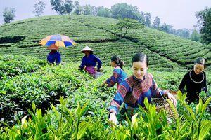 Thái Nguyên: Đưa ngành 'công nghiệp không khói' trở thành kinh tế mũi nhọn