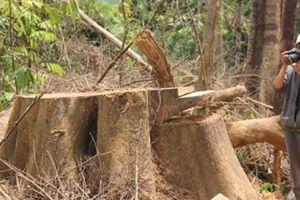 Vụ tàn sát rừng ở Quảng Nam: 6 cán bộ kiểm lâm bị đình chỉ công tác
