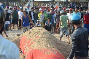 Ngư dân tổ chức an táng cho cá voi nặng hơn 2, 5 tấn
