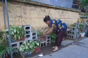 Hà Nội: Lan tỏa vườn hoa thanh niên trên nền rác thải