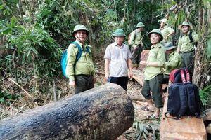 Đình chỉ công tác 6 cán bộ kiểm lâm để mất rừng ở Quảng Nam