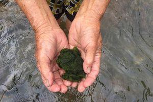 Kỳ bí ngôi làng trường thọ vì ăn rêu đá