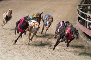 Đà Nẵng làm trường đua ngựa, đua chó rộng gần 600.000 m2