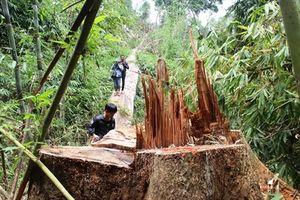 Đình chỉ công tác 6 cán bộ kiểm lâm để mất rừng