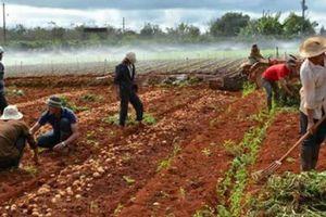 Đến lượt khoai tây, hành tây Đà Lạt rủ nhau giảm giá còn 4.000 đ/kg