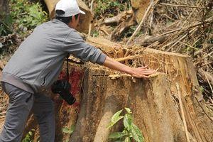 Để mất rừng, 6 cán bộ kiểm lâm bị đình chỉ công tác