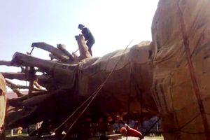 Kiểm lâm Thừa Thiên-Huế khẳng định 3 cây 'quái thú' đảm bảo về hồ sơ, thủ tục