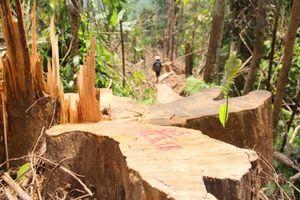 6 cán bộ Kiểm lâm bị đình chỉ công tác do để mất rừng