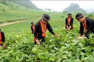 Tỷ lệ hộ nghèo ở Việt Nam giảm lớn nhất trong thập niên qua