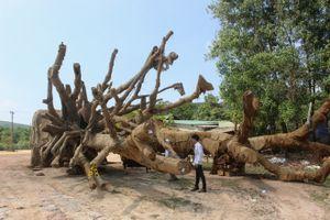 Một xe chở cây 'khủng' dừng ở khu đô thị Ecopark 2 ngày