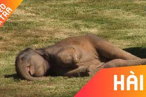 Những loài động vật 'đam mê' ngủ nhất thế giới