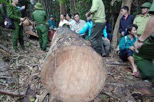 Quảng Nam tổng rà soát cơ sở chế biến gỗ sau các vụ phá rừng