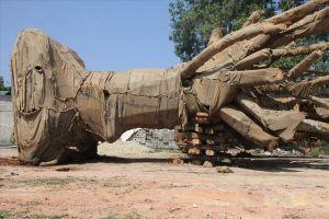 Cả 3 cây 'quái thú' có nguồn gốc từ Đắk Lắk