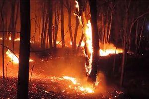 Lửa thiêu rụi hơn 30ha rừng trong Khu bảo tồn thiên nhiên Tà Cú