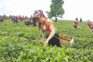 Tưng bừng Lễ hội trà cao nguyên Mộc Châu 2018