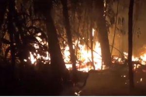 Trắng đêm cứu rừng trong Khu bảo tồn thiên nhiên Tà Cú