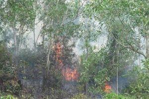 Nhanh chóng dập tắt đám cháy trên núi Bà Hỏa (Bình Định)