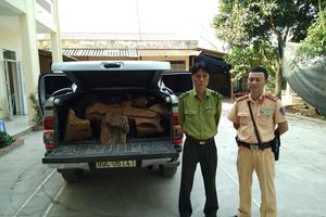 Hà Nội: Phát hiện, bắt giữ xe ô tô bán tải chở gỗ lậu