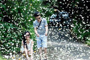 Lạc lối giữa rừng bướm trắng bay rợp trời ở Cúc Phương