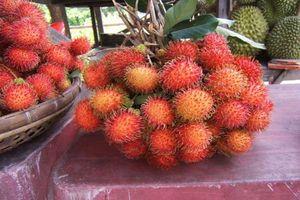 Chôm chôm Việt Nam chính thức 'vượt rào' vào New Zealand