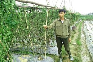 2 nông dân bị kẻ gian hủy hoại 8 sào mướp đắng trong đêm