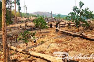 Báo cáo khống diện tích rừng trồng trục lợi tiền tỷ