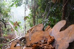 Quảng Nam: 'Nóng' chuyện giữ rừng, 'máu' đại ngàn vẫn chảy