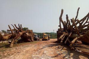 3 cây 'khủng' chuẩn bị rời Huế ra phía Bắc