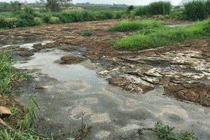 Xưởng sản xuất tinh bột dong và sắn xả thải ra sông Chu: Đình chỉ hoạt động và khắc phục ô nhiễm