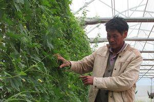 Đà Nẵng: Hiệu quả từ mô hình ứng dụng công nghệ cao trong sản xuất nông nghiệp
