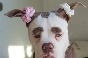 Chú chó nổi tiếng với gương mặt luôn buồn rầu đánh lừa mọi người