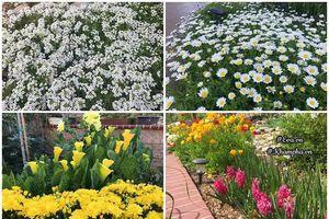 Thán phục chồng đảm tự bốc gạch, xây vườn bậc thang cho vợ trồng hoa