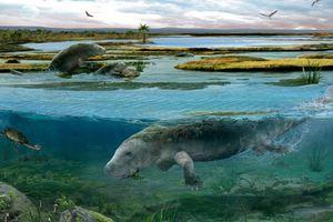Phát hiện 'quái vật biển' cách đây 42 triệu năm