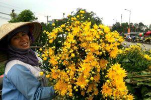 Bèo bọt 10.000 đồng 50 bông hoa cúc vàng