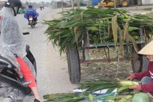 Không cần thương lái, nông dân tự mang ngô từ ruộng lên đường bán