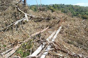 Đắk Nông: Tạm giữ khẩn cấp một phó trạm quản lý bảo vệ rừng