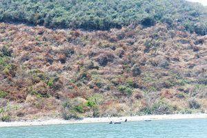 Vân Phong, Khánh Hòa: Ồ ạt phá rừng, chiếm đảo
