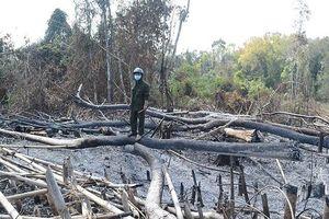 Chốt phó bảo vệ rừng bị tình nghi nhận nhận tiền lâm tặc