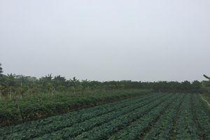 Huyện Tiên Du phải báo cáo Chủ tịch UBND tỉnh Bắc Ninh về vụ việc có dấu hiệu sai phạm đất đai