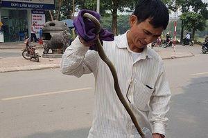 Cư dân Linh Đàm, Hà Nội hoang mang vì 2 lần thấy rắn dài cả mét 'từ trên trời rơi xuống'