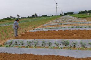 Quảng Nam: Phập phồng giá đầu ra cho nông sản