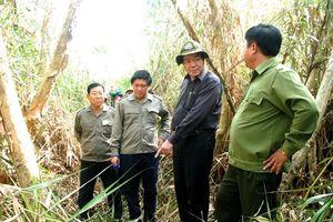 24.000ha rừng U Minh Hạ đang dự báo cháy cực kỳ nguy hiểm