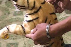 2 con hổ 'cưỡi' xe khách từ TP HCM ra Hà Nội
