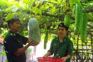 Đồn Biên phòng Hòn Khoai đảm bảo nguồn thực phẩm sạch tại chỗ